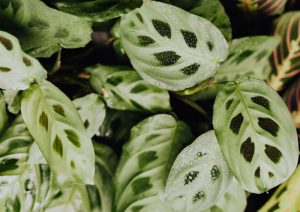 does calathea need sunlight