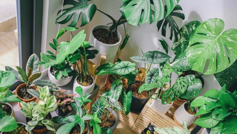 best plant mister