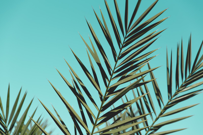 palm centre
