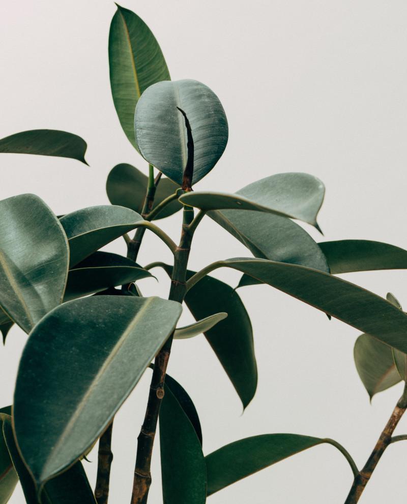popularplants