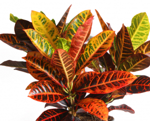 red and green houseplant