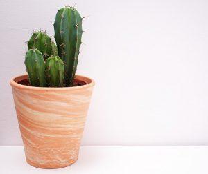 houseplants for arizona
