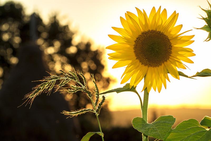 houseplants like direct sunlight