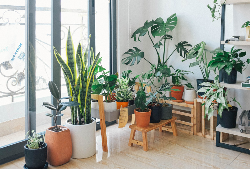 houseplants that grow quickly