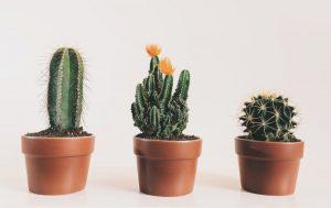 houseplants that like acidic soil