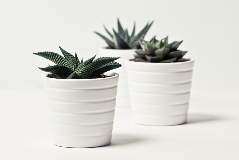 plants for very small pots