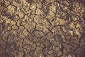 potting soil won't absorb water