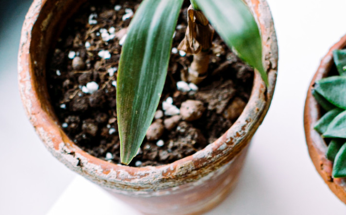 what are the white things in potting soil