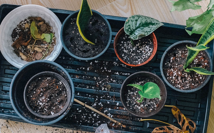 what is the white stuff in potting soil