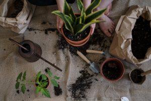 can potting soil go bad