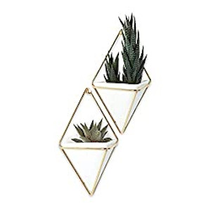 decorative wall hangers for plants