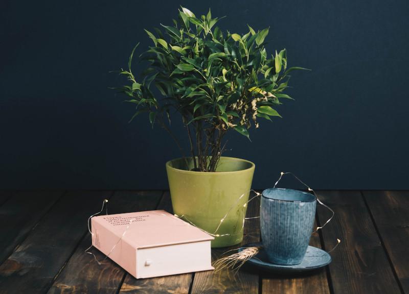 best houseplant books