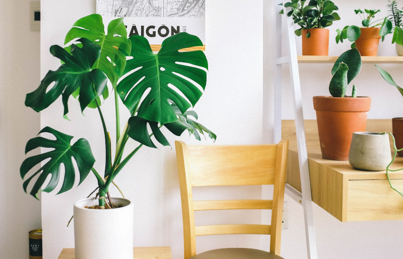 humidifiers for monstera